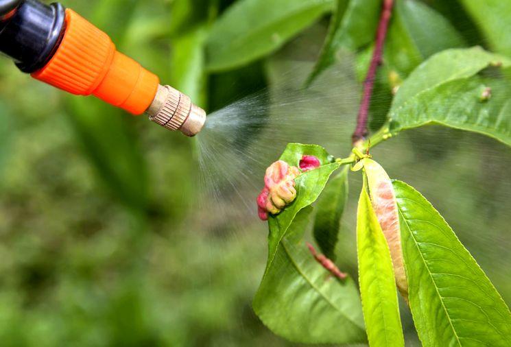 Профилактика против вредителей в саду