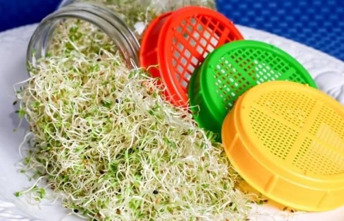проращиватель для микрозелени