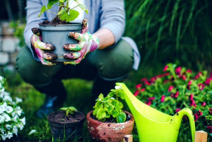 Чем и как удобрять цветник весной