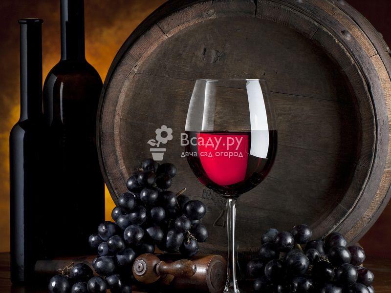 Полезные свойства винограда: применение в виноделии