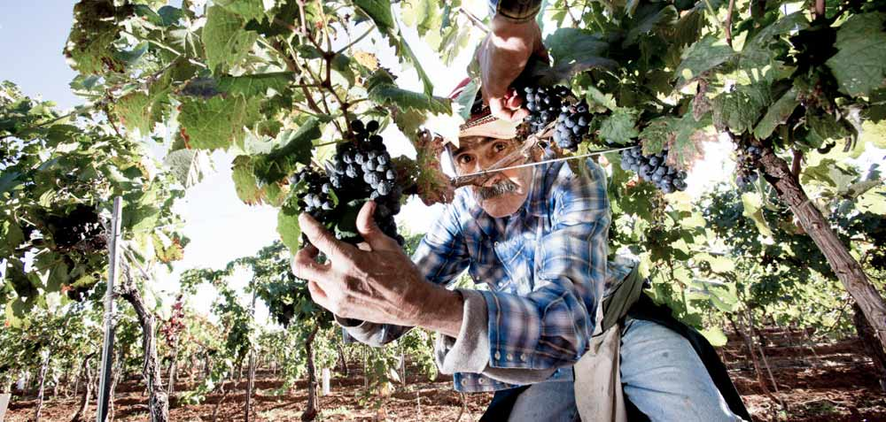 Sonoita-Wine-Issue-3_Edible-Baja-Arizona_048-Kent-Calaghan-_Calaghan-Vineyard-Elgin-©jeffSmith-a_02.jpg