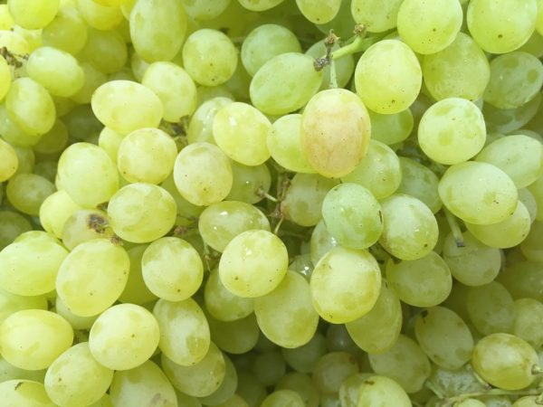 Употреблять виноград нельзя при язве желудка
