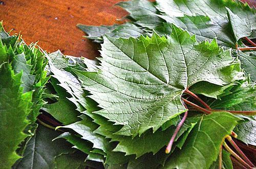 Листья винограда, пригодные для маринования
